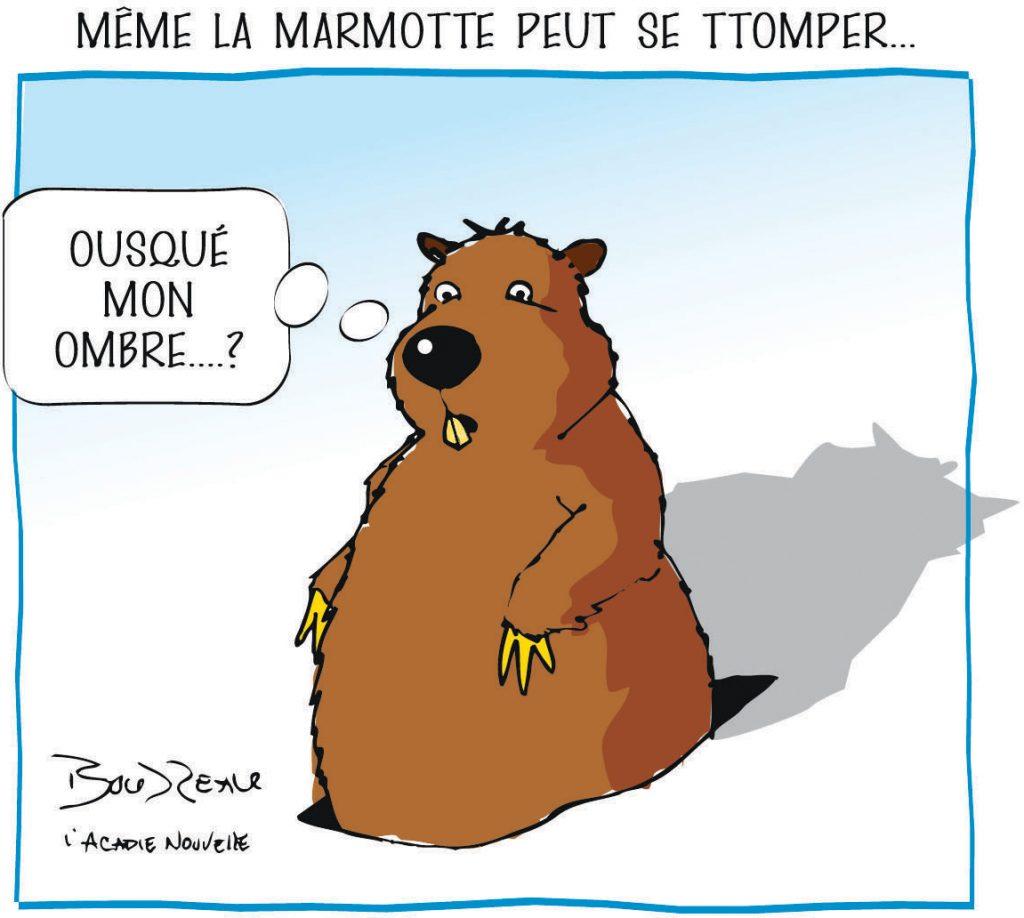 10_marmotte